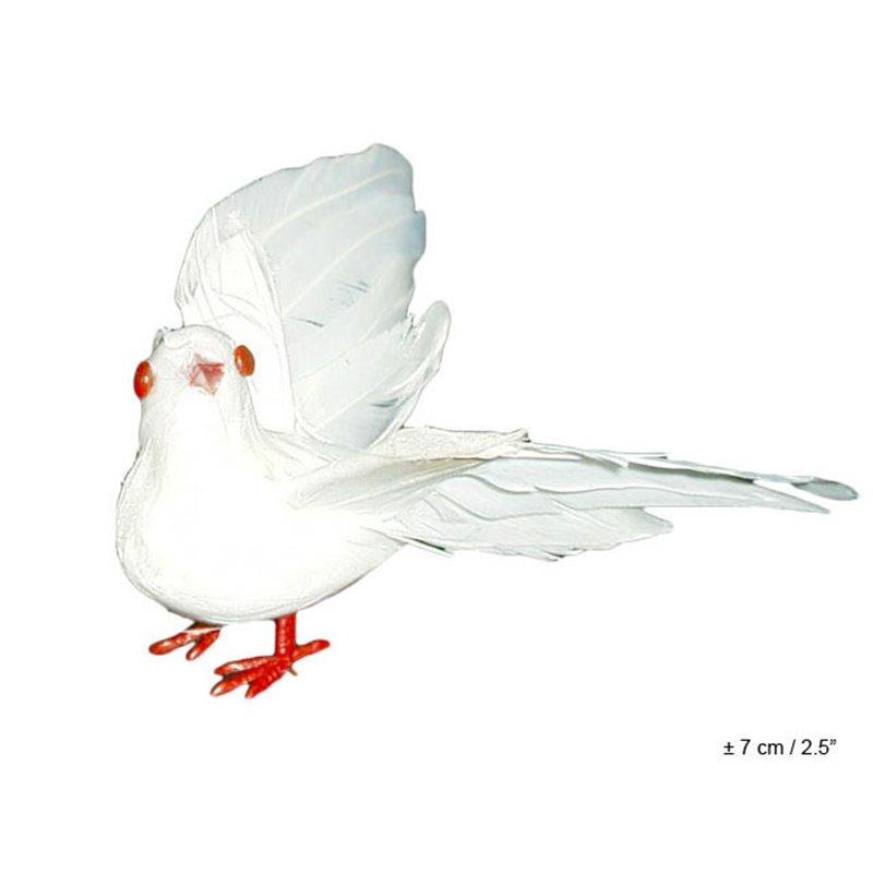 Petite colombe blanche avec plumes