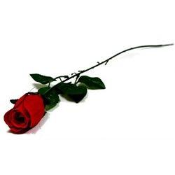 Fleur Artificielle Rose Velours de Longueurs Différentes
